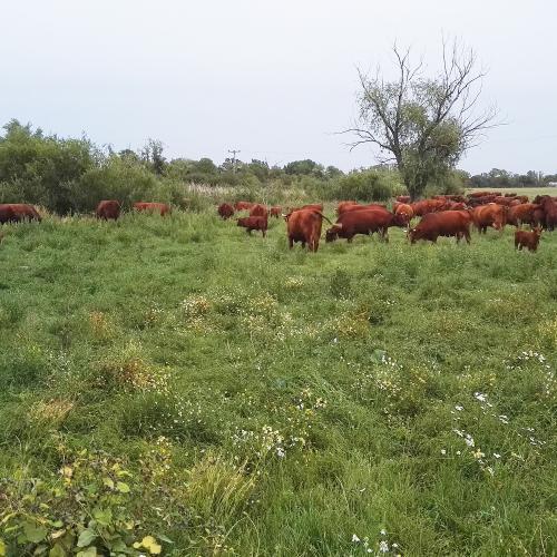 Landwirtschaftsbetrieb Zschoche