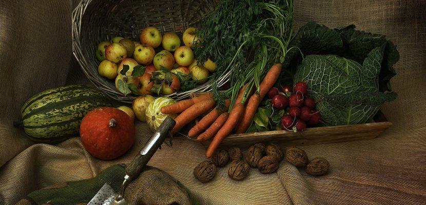 harvest-3679075.jpg