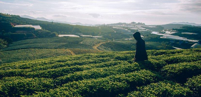 Tee Plantage_Tee_PIELERS_gesund.jpg