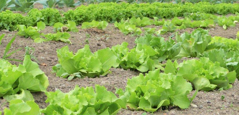 salad-2482457_1920.jpg
