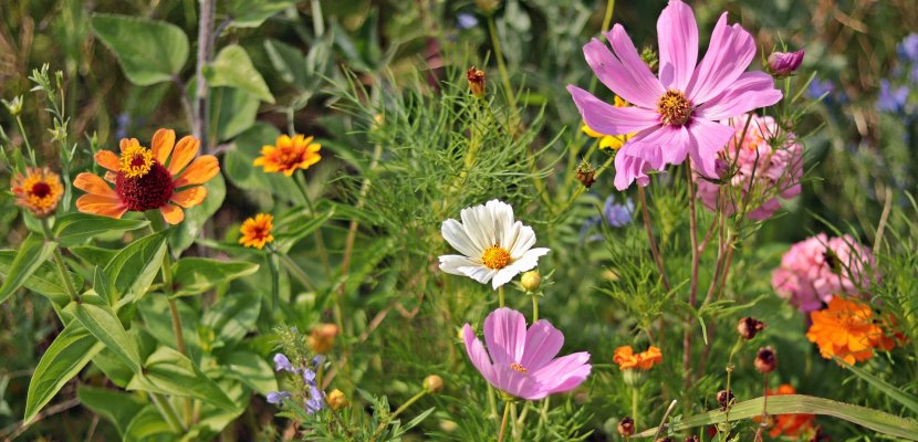 Blumen_Wiese_Mischkultur.jpg