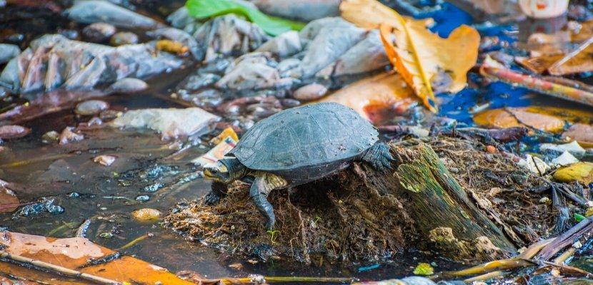 Schildkröte - Müll - Umweltverschmutzung.jpg