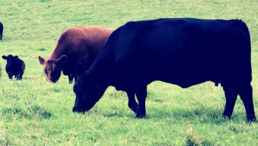 Nachhaltiger Fleischgenuss - 3 Dinge auf die Du achten solltest