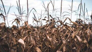 Teures Gemüse – darum steigen die Preise nach Dürreperioden wirklich!