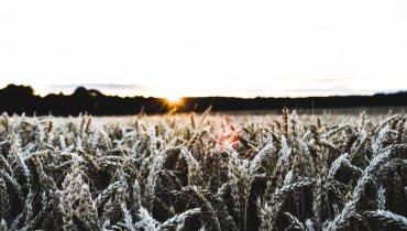 Die Natur als Supermarkt? Ein Gespräch mit Landwirt Dennis von der Lieth über die Verfügbarkeit von Lebensmitteln