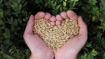 In Love With Landwirtschaft – 5 Gründe, warum wir die regionale Landwirtschaft lieben