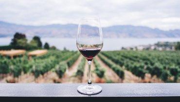 Deutsche Weine – Qualität aus der Region