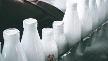 Büffelmilch. Eine Delikatesse mit Tradition