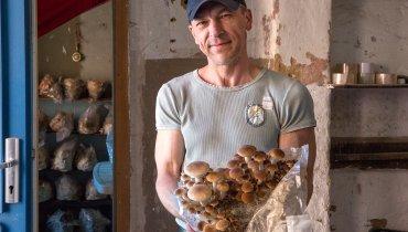 Vasyl Shvedyk und die Pilze