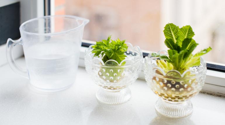 Regrowing: Gib Deinem Gemüse ein zweites Leben
