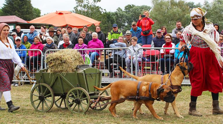 Harzer Landwirtschaftsfest