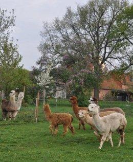 """Alpacahof """"Zwei Eichen"""""""