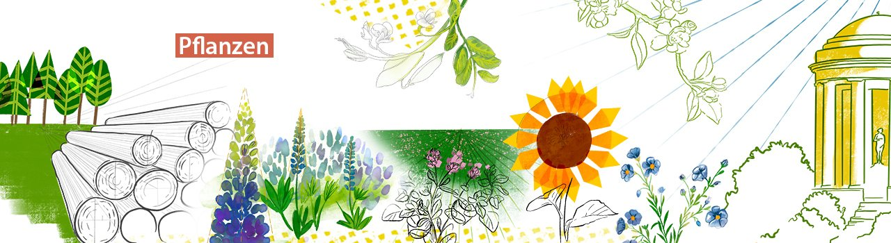 pflanzen-2.jpg