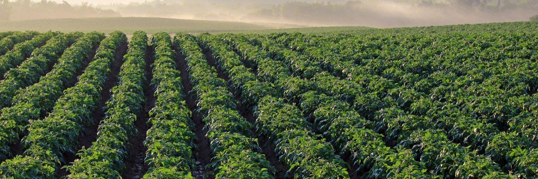 potato-field-4357002_1920.jpg