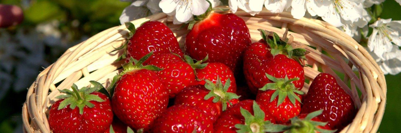 Erdbeer- u. Himbeerhof Steinwehr