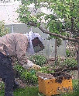 Siekbee - Honig aus Stormarn