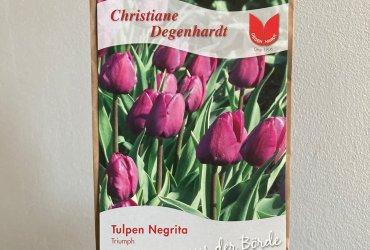 """Tulpe """"Negrita"""""""